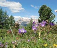 Settimana per gli amanti dell' Alto Adige