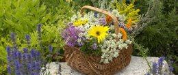 Settimane della fioritura allo Sporthotel Panorama