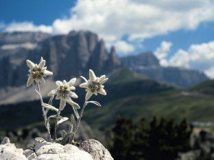 Magia nelle Dolomiti con 4= 3